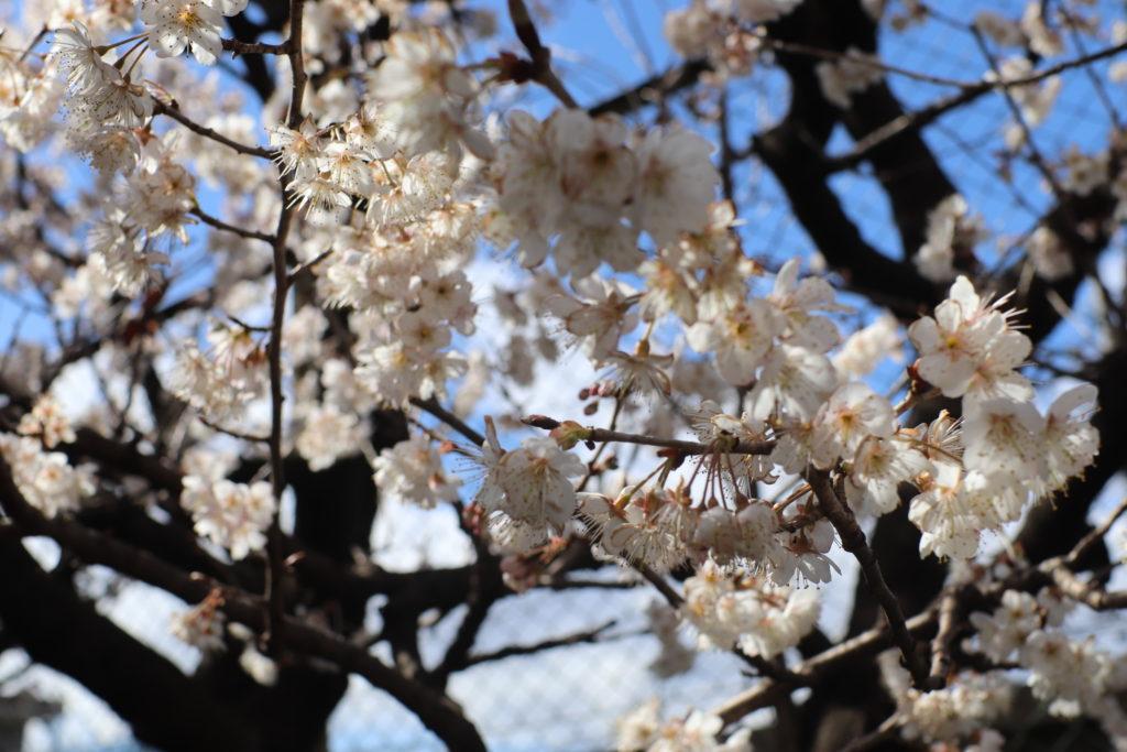 【下連雀しらかば児童公園】めずらしい遊具&桜と写真が撮れるすべり台@三鷹